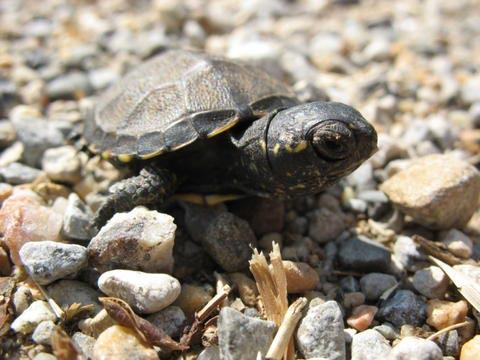 Reptiles et Amphibiens du Gard @ Maison du Grand Site des Gorges du Gardon | Sainte-Anastasie | Languedoc-Roussillon | France