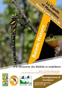 A la découverte des libellules et amphibiens @ La Capelle-et-Masmolène | Occitanie | France