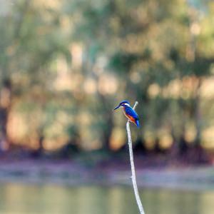 Les oiseaux des cours d'eau @ Saint-Chaptes | Occitanie | France