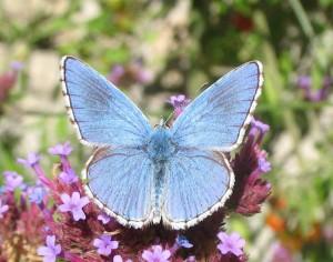 Découverte et reconnaissance des papillons @ Devant la mairie | Génolhac | Occitanie | France