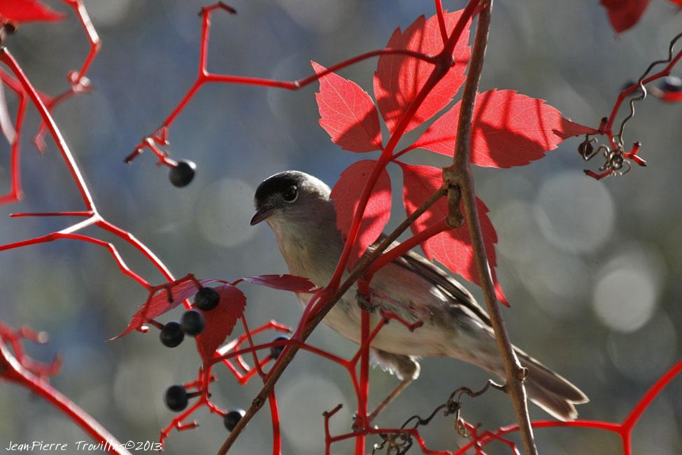 Réveil ornithologique @ Chartreuse de la Valbonne