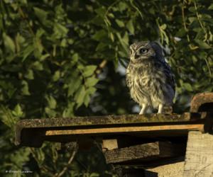 Les oiseaux de Mouressipe @ Saint-Côme et Maruéjols