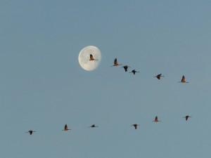 La migration des oiseaux @ Marguerittes | Occitanie | France