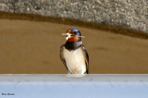 Les oiseaux et la migration @ Génolhac | Occitanie | France