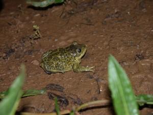 Annulée (reportée au 8 juillet) - La biodiversité au cœur de la gestion @ Bois du Boucanet | Le Grau-du-Roi | Languedoc-Roussillon | France