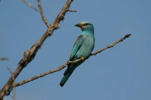 A l'écoute des oiseaux @ Junas | Languedoc-Roussillon Midi-Pyrénées | France