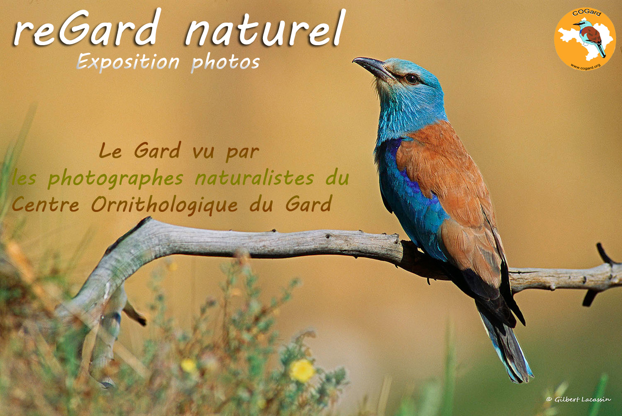 affiche-expo-regardnaturel-06