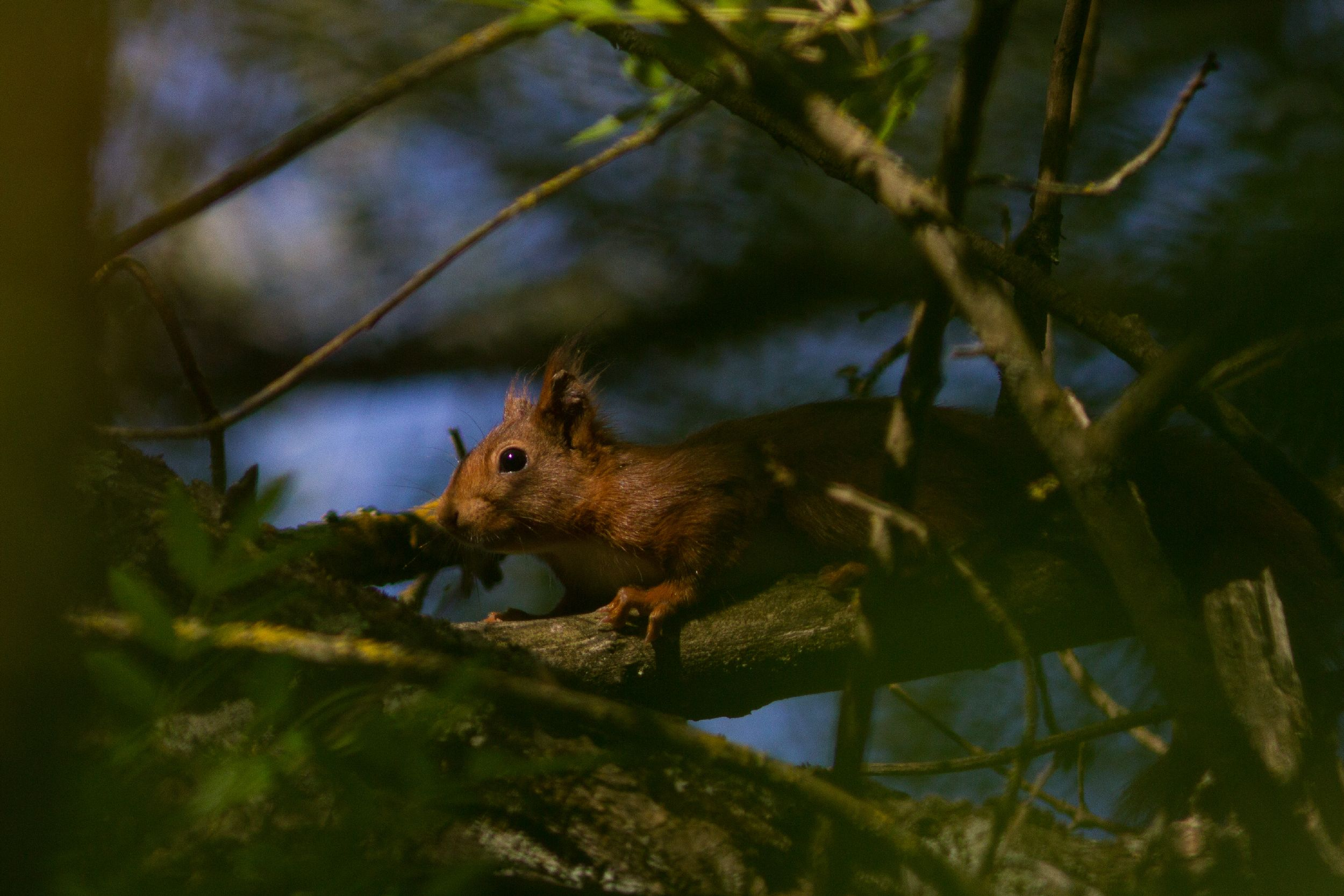 Découvrir la biodiversité du Bois des Espeisses @ Nimes Bois des Espeisses