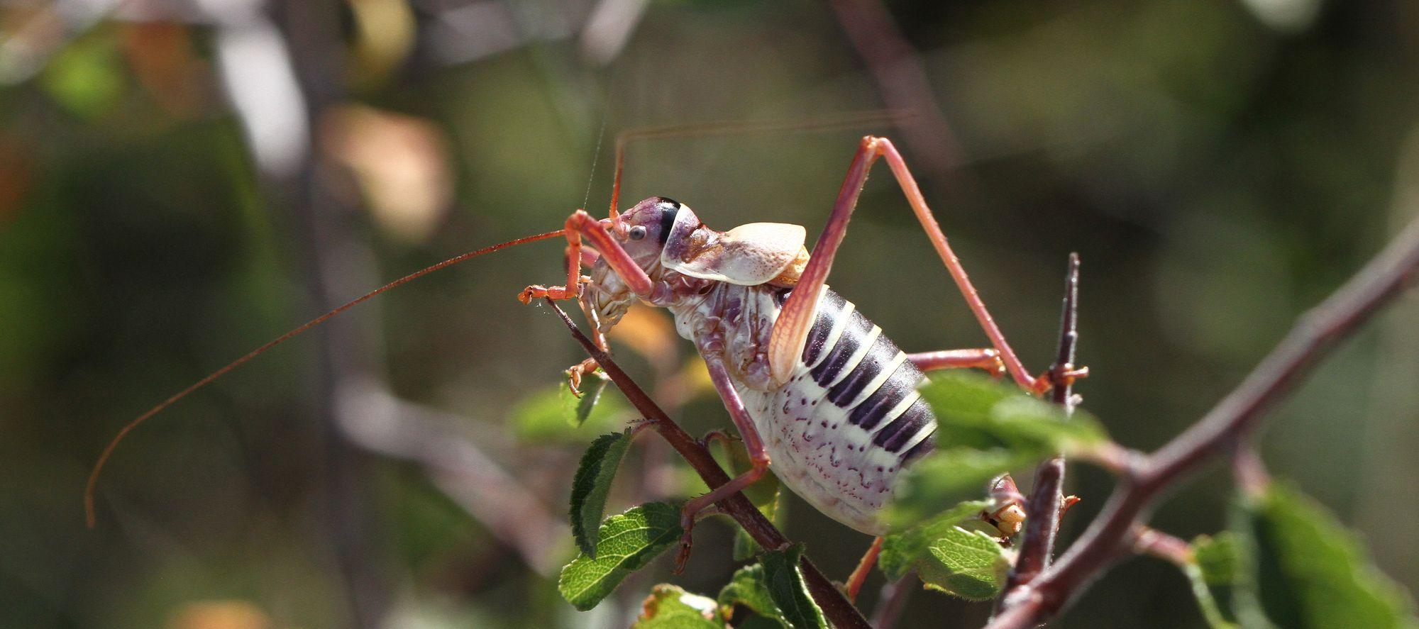 Sortie Entomologique