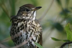 Les oiseaux de la Bambouseraie @ Bambouseraie de Prafrance | Générargues | Occitanie | France