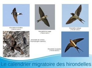Migration des Hirondelles @ Médiathèque