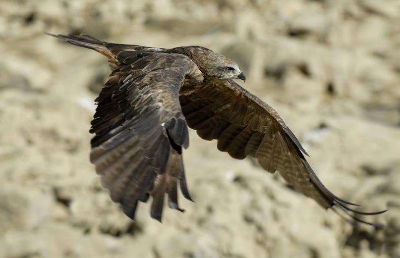 Les oiseaux des Concluses de Lussan @ Concluses de Lussan