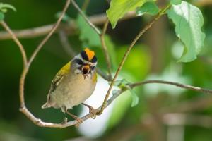 Les oiseaux de la Garrigue