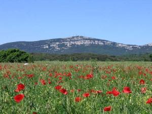 Mont_Bouquet