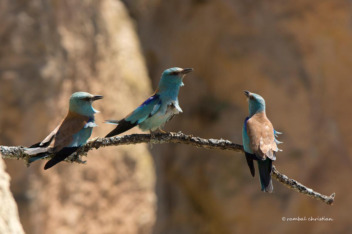 Oiseaux des Ripisylves entre trame verte et bleue @ Boucoiran et Nozières