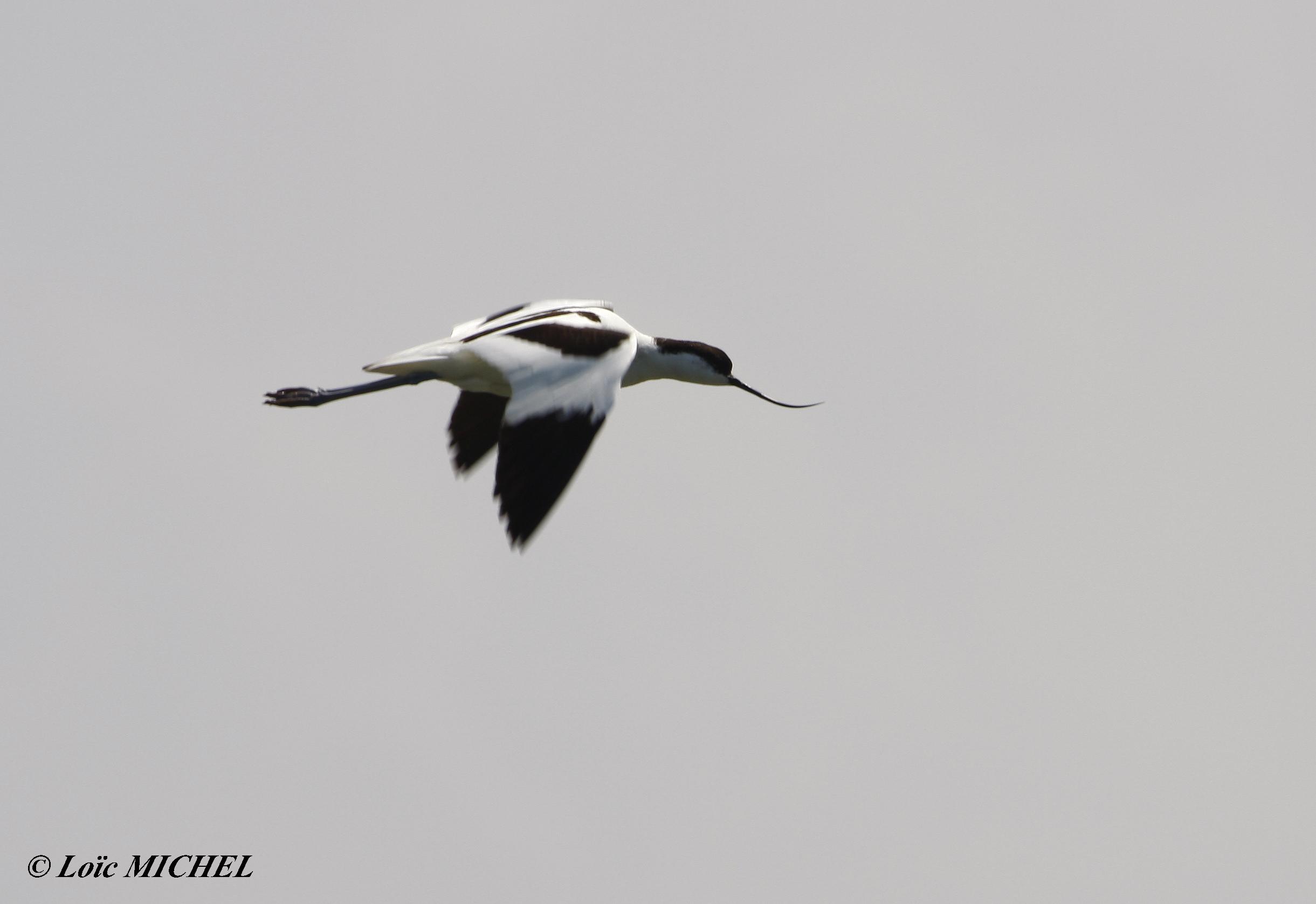 Les Oiseaux du Ponant : Entre Terre et Eau @ Le Grau du Roi