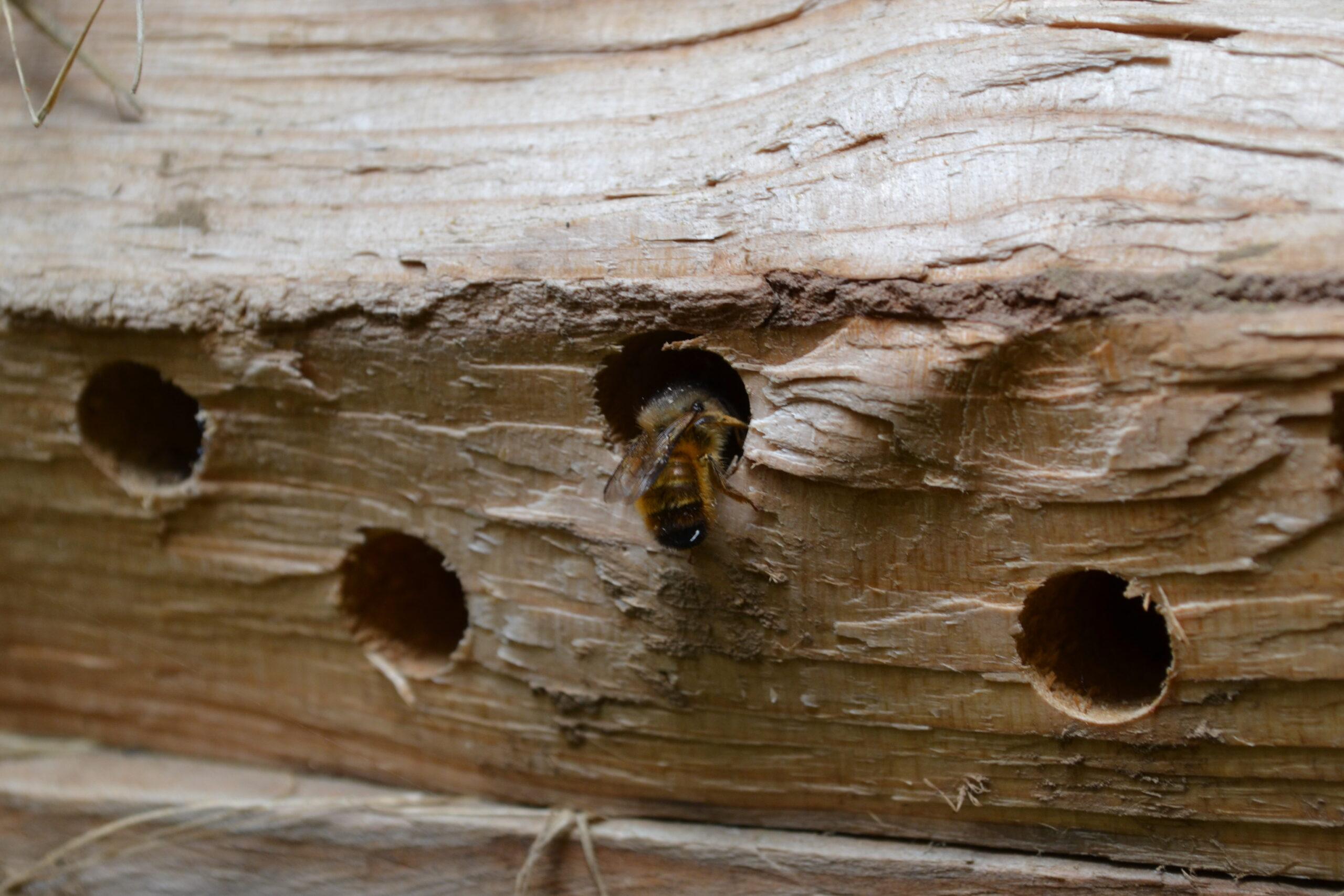 Des abris à abeilles solitaires @ Parc de la Mairie de Bouillargues