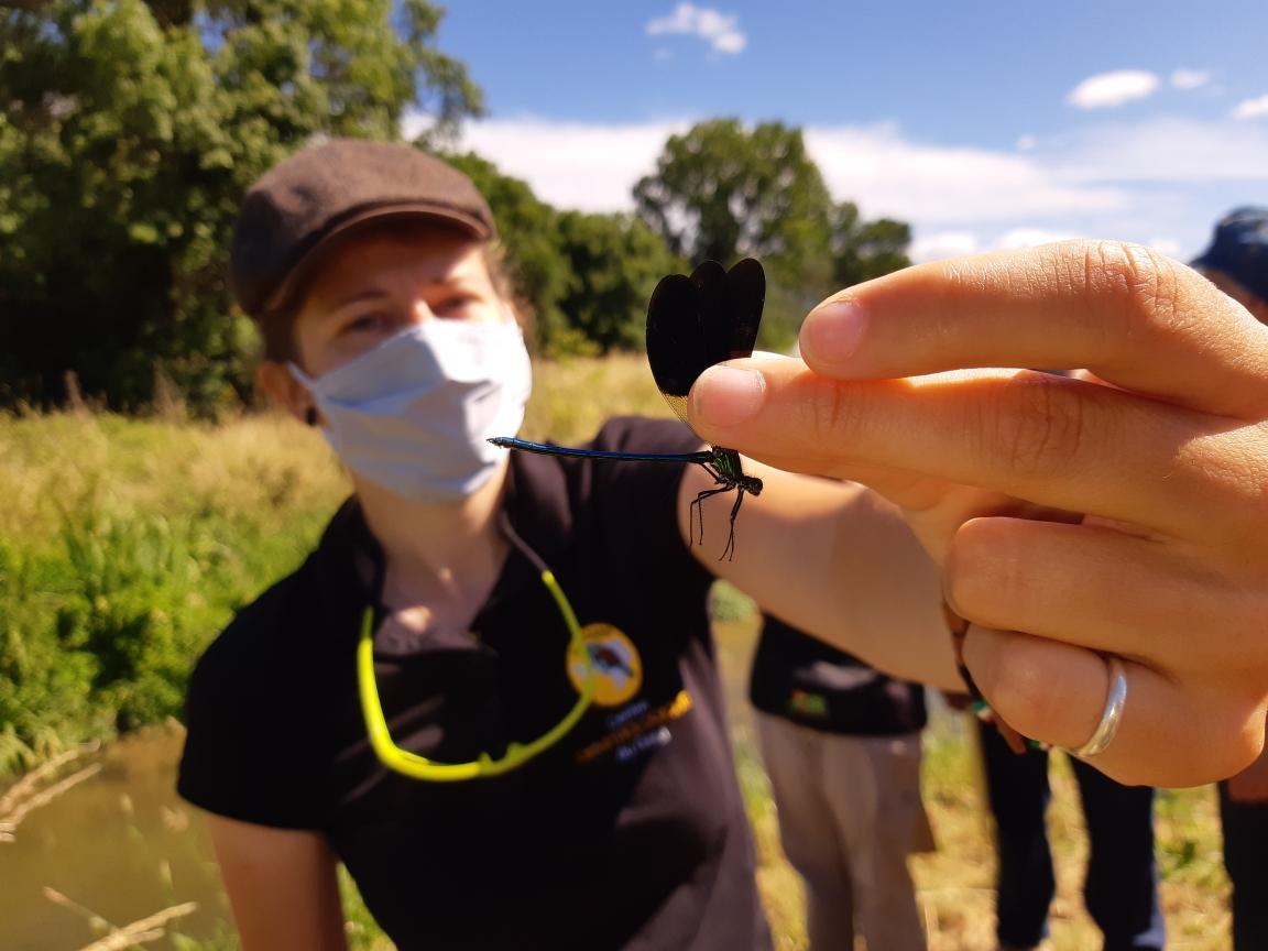 Histoire de Trame : Bleue libellule et Vert de fleurs @ Milhaud